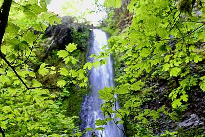Photograph - Water Fall In The Trees by Brian Eberly