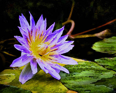 Photograph - Water Flower Faux Watercolor by Endre Balogh