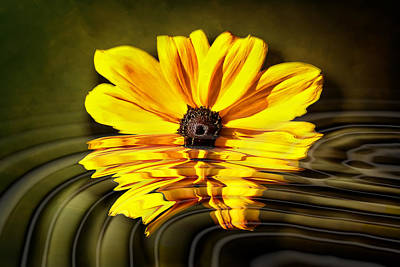 Art Print featuring the photograph Water Flower by Gary Smith