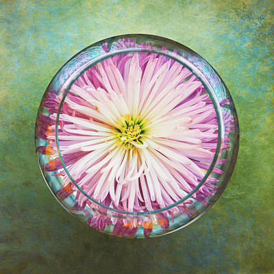 Water Flower Art Print by Scott Norris