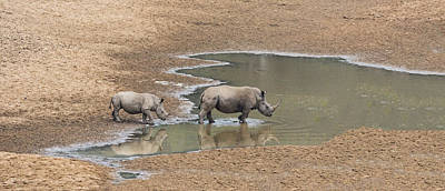 African Horned Animal Photograph - Water For Rhinos by Stephen Stookey