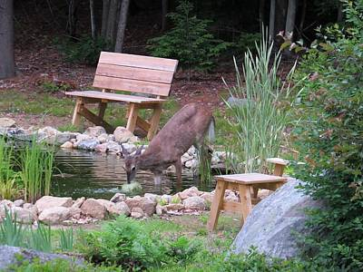 Photograph - Water Fountain Deer by MTBobbins Photography