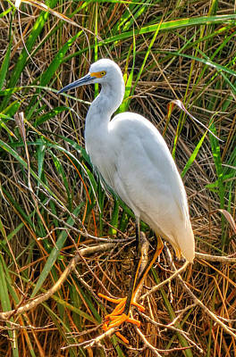 Photograph - Water Fowl I by Kathi Isserman