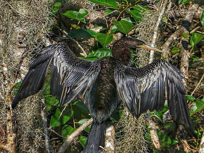 Photograph - Water Fowl IIi by Kathi Isserman
