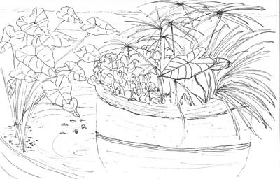 Conservatory Drawing - Water Garden by Elizabeth Thorstenson