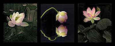 Photograph - Water Garden Triptych by Jessica Jenney
