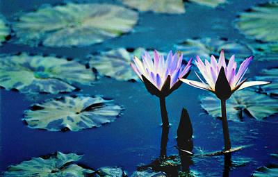 Peacock Feathers - Water Glow by Steve Karol