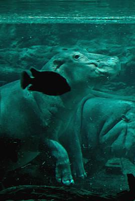 Hippopotamus Digital Art - Water Horse Ballet by DigiArt Diaries by Vicky B Fuller