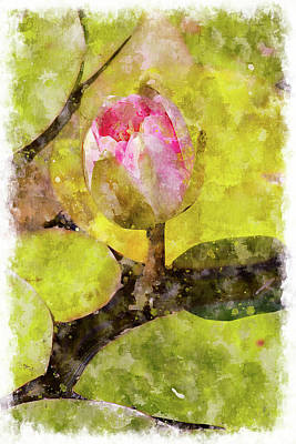 Water Hyacinth Bud Wc Art Print by Peter J Sucy