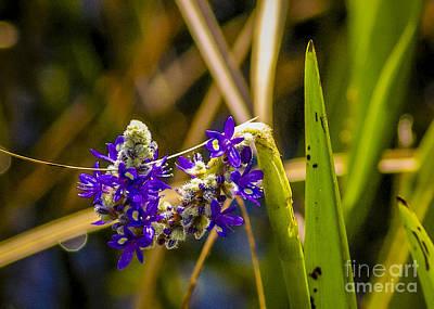 Unicorn Dust - Water Hyacinth by Nancy L Marshall