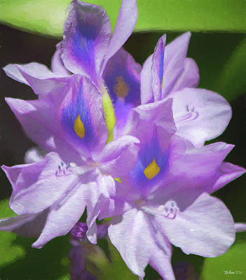 Photograph - Water Hyacinth Painterly 2 by Teresa Wilson