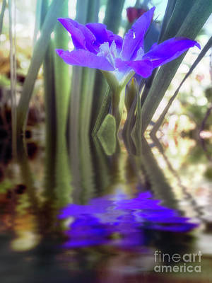 Photograph - Water Iris Reflections by Elaine Teague