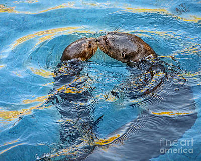 Otter Photograph - Water Kisses by Jamie Pham