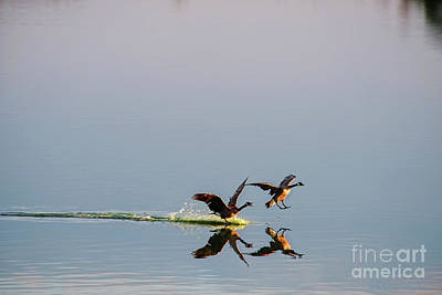 Photograph - Water Landing by David Arment