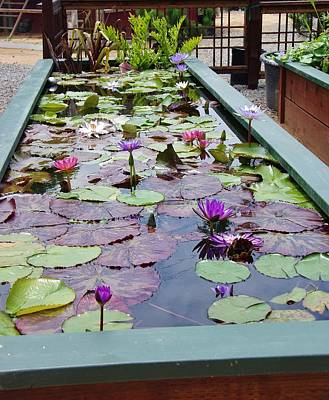 Photograph - Water Lilies 2 by Phyllis Spoor