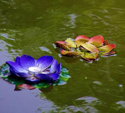 Photograph - Water Lilies 3 by Phyllis Spoor