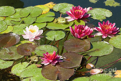 Photograph - Water Lilies And Frogs by Irina Afonskaya