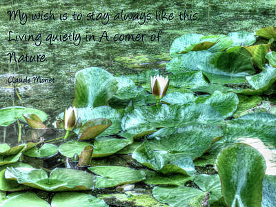 Photograph - Water Lilies And Monet by Leslie Montgomery
