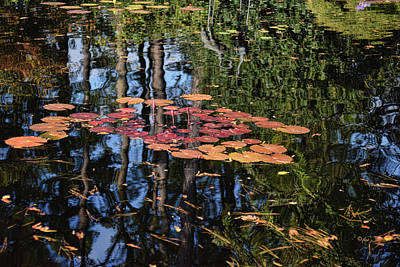 Photograph - Water Lilies And Reflections by Paulette B Wright