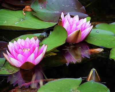 Photograph - Water Lilies by Anthony Jones