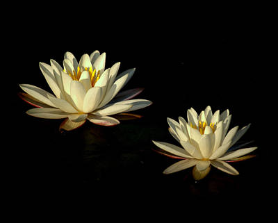 Photograph - Water Lilies by Beth Vincent