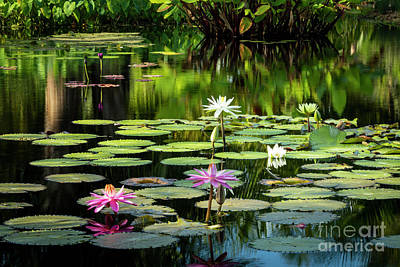 Photograph - Water Lilies by Brian Jannsen