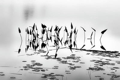 Water Lilies Art Print by Catherine Alfidi