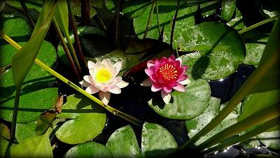 Photograph - Water Lilies by Donna Spadola