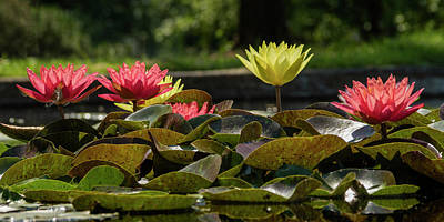 Photograph - Water Lilies by Garry McMichael
