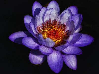Photograph - Water Lilies II by Kathi Isserman