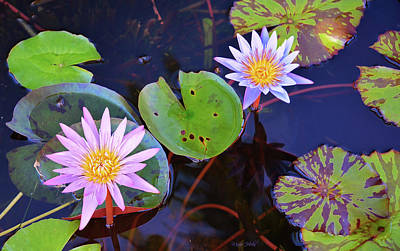 Photograph - Water Lilies In Kauai by Marie Hicks