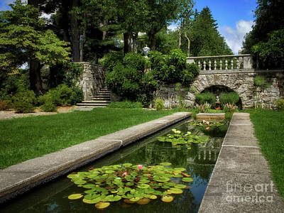 Water Lilies In The Pool Art Print by Mark Miller