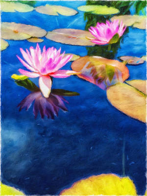 Photograph - Water Lilies by Jonathan Nguyen