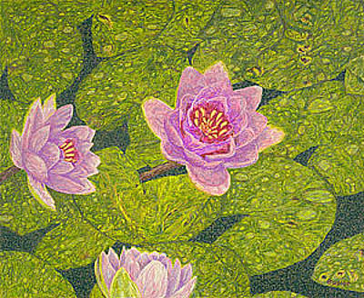 Lilies Drawings - Water Lilies Lily Flowers Lotuses Fine Art Prints Contemporary Modern Art Garden Nature Botanical by Baslee Troutman