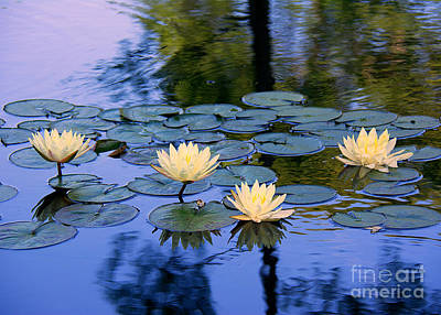 Photograph - Water Lilies by Lisa L Silva