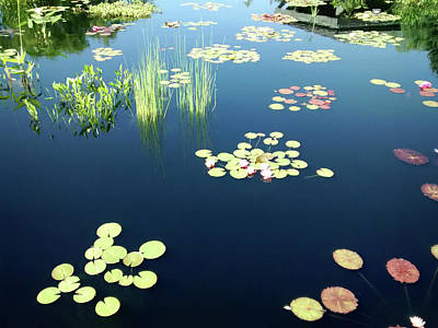 Photograph - Water Lilies by Marilyn Hunt