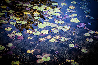 Winter Animals - Water lilies  by Maxwell Dziku