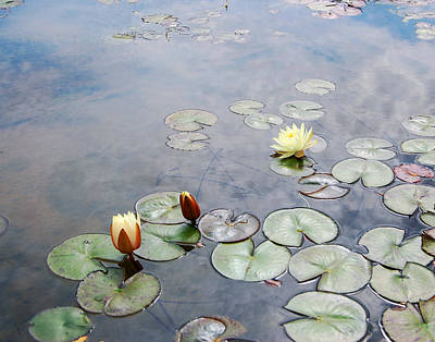 French Countryside Photograph - Water Lilies Monet Style by Marion McCristall