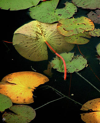 Photograph - Water Lilies No 2 Vertical by Wayne King