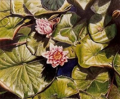 Water Lilies On The Ringdijk Art Print by Constance Drescher