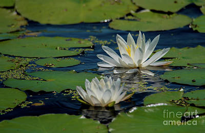 Photograph - Water Lilies by Paul Mashburn