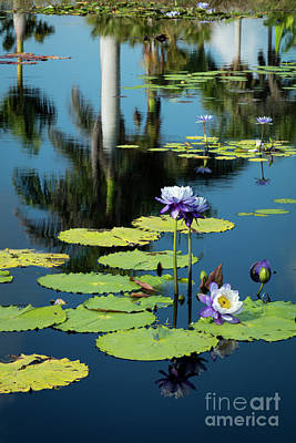 Photograph - Water Lilies Vi by Brian Jannsen