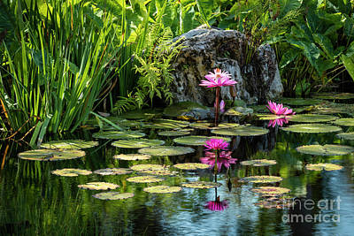 Photograph - Water Lilies Vii by Brian Jannsen