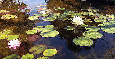 Painting - Water Lilies With Water by Roena King