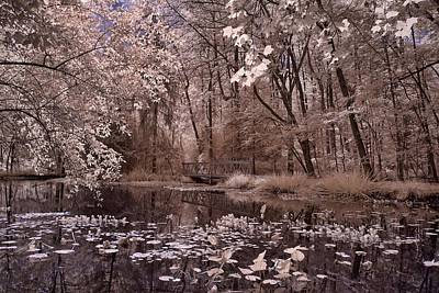 Photograph - Water Lillies by Fred Moore