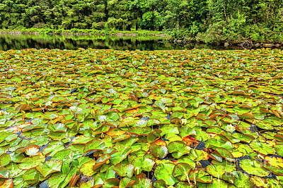 Photograph - Water Lillies by Jim Orr