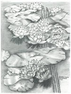 Lilly Pond Drawing - Water Lillies by Sharon Blanchard