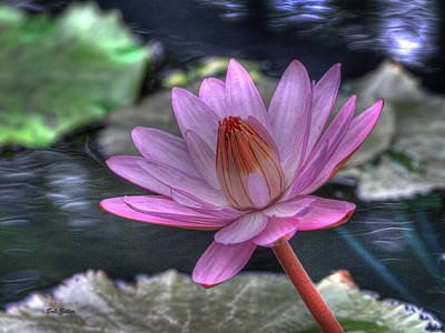 Photograph - Water Lilly #1 by Bob Zeller