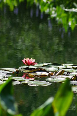 Photograph - Water Lilly I by Angela Hansen