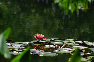 Photograph - Water Lilly II by Angela Hansen